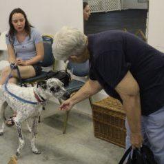 family dog classes